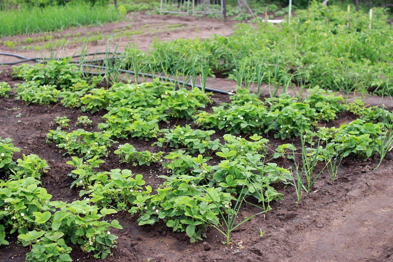 Comment créer un potager dans un jardin ?