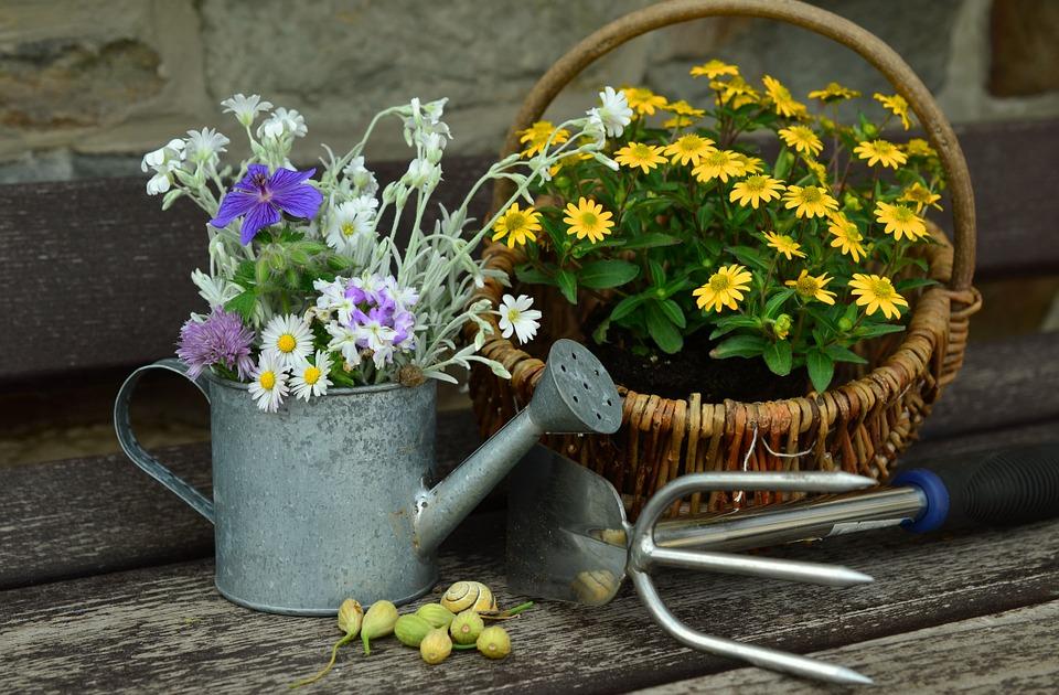 Planter des fleurs d'hiver : lesquelles choisir ?