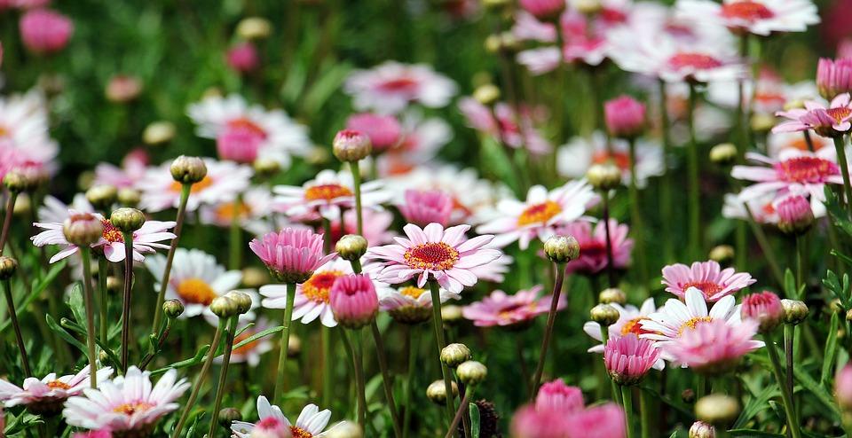 Quels types de fleurs planter dans un jardin ?