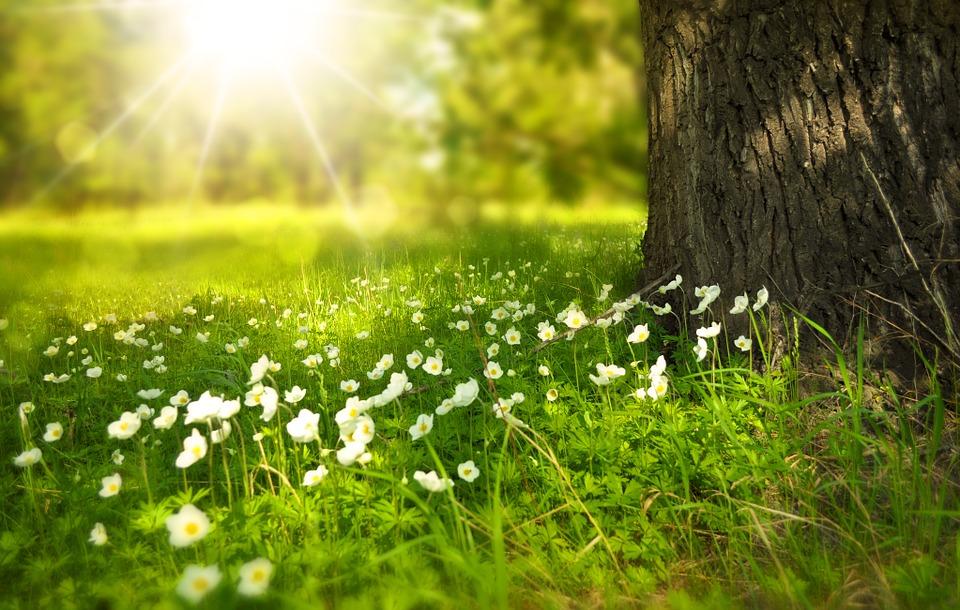 Quelles sont les fleurs qui fleurissent en été ?