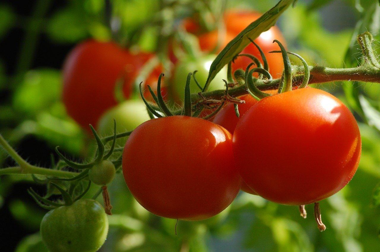 Quels légumes planter dans votre potager ?